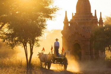 BM01306 Bullock cart & pagoda, sunset, Bagan, (Pagan), Myanmar, (Burma)