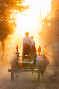 BM01307 Bullock cart & pagoda, sunset, Bagan, (Pagan), Myanmar, (Burma)