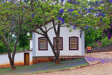 BRA1930AW South America, Brazil, Minas Gerais state, Tiradentes, colonial house under a jacaranda tree in the town centre of Tiradentes