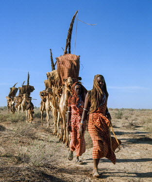 Kenya, North Horr, Marsabit County. The Gabbra - camel-herding nomads of northern Kenya - on the move, carrying their worldly possessions on camels.