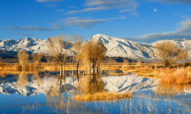 AR4885100036 Early morning winter light and setting moon over an Eastern Sierra Pond, Owens Valley, Bishop, California, USA