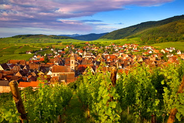 EU09BJN0402 Early morning overlooking village of Riquewihr, along the Wine Route, Alsace, Haut-Rhin, France.
