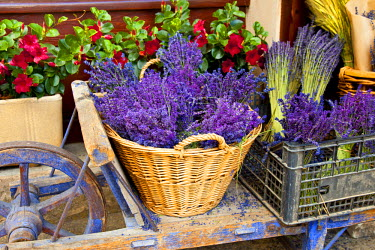 EU09BJN0396 Cart with fresh lavender for sale, Sault Provence, France.