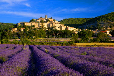 EU09BJN0453 Sunrise over lavender field and the village of Banon in the Vaucluse, Provence, France.