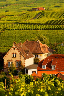 EU09BJN0489 Homes and vineyard in Riquewihr, along the Wine Route, Alsace, Haut-Rhin, France.