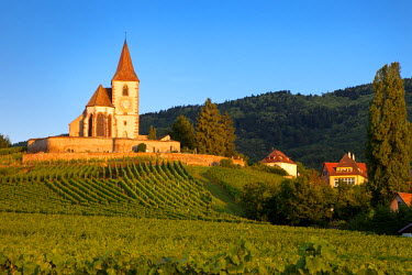 EU09BJN0531 Dawn at the 15th century church of St. Jacques surrounded by the vineyards of Grand Cru in Hunawihr, Alsace, France.