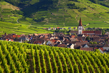EU09BJN0547 Village of Ammerschwihr surrounded by vineyards of the Grand Cru along the Wine Route, Alsace, Haut-Rhin, France.