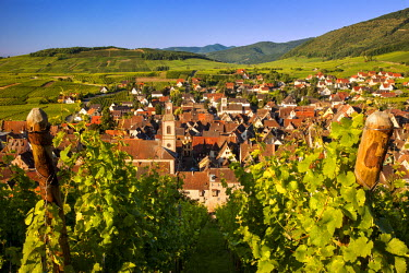 EU09BJN0539 Early morning overlooking village of Riquewihr, along the Wine Route, Alsace, Haut-Rhin, France.
