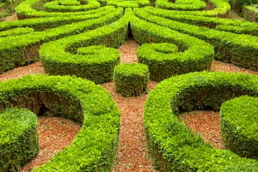 EU09BJN0709 Manicured Boxwood Gardens at Hotel Carnavalet, les Marais, Paris, France