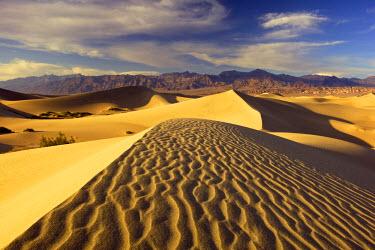 US05JCO0073 USA, California, Death Valley National Park, Golden light at sunset illuminates textures on the Mesquite Dunes