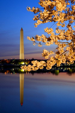 US09BJN0034 Dawn at the Tidal Basin with blossoming cherry trees and the Washington Monument, Washington DC, USA.