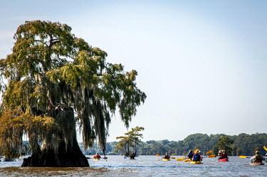 US19AJN0068 USA, Louisiana, Atchafalaya Basin, Lake Fausse Point State Park, kayakers padding among bald cypress standing in water, a deciduous conifer with Spanish moss (aka grandfathers beard), BasinKeeper Fund...