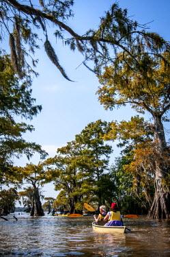 US19AJN0067 USA, Louisiana, Atchafalaya Basin, Lake Fausse Point State Park. BasinKeeper Fundraiser kayakers padding among bald cypress (Taxodium distichum) standing in water with Spanish moss.