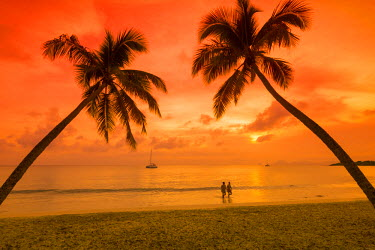 FW03064 Caribbean, Martinique, Sainte Anne, Grande Anse des Salines