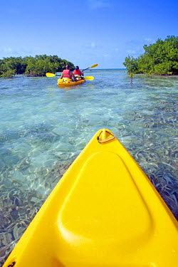 BLZ0149AW Central America, Belize, a point of view shot of kayaking through mangrove cayes in the shallow flats of the Caribbean Sea