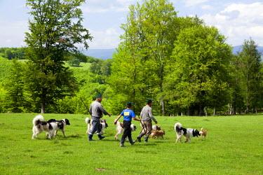 ROM0100 Romania, Transylvania. Shepherds with their guard dogs.