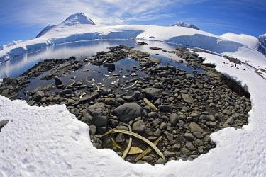 ANT0868AW Antarctica, Antartic Peninsula, Southern Ocean. Whale Bones litter the shore of an Island along the Antarctic Peninsula.