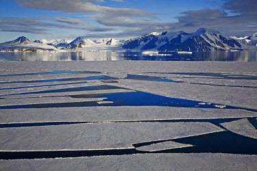 ANT0869AW Antarctica, Antartic Peninsula, Southern Ocean. Sea Ice or Pack Ice off the Antarctic Peninsula in Summer.
