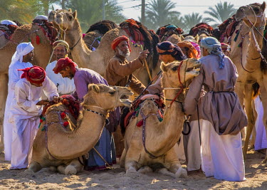OMA2421AW Middle East, Arabian Peninsula, Sultanate of Oman. Traditional camel race between two individuals in desert country in Oman during the annual celebration of Eid. The riders are at the starting line wi...