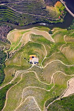 POR7375AW Europe, Portugal, Tras-os-Montes e Alto Douro, Douro Valley aerial view of vineyards and vineyard terraces and the Douro (Duero) river in the UNESCO World Heritage listed Alto Douro region