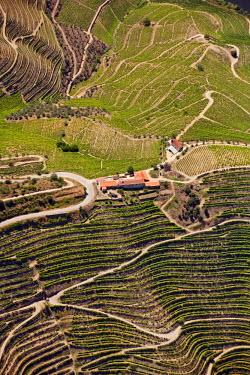 POR7376AW Europe, Portugal, Tras-os-Montes e Alto Douro, Douro Valley aerial view of vineyards and vineyard terraces and the Douro (Duero) river in the UNESCO World Heritage listed Alto Douro region