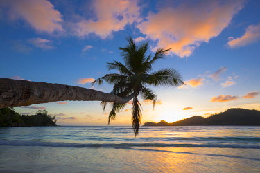 SC01241 Palm trees and tropical beach, southern Mahe, Seychelles
