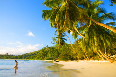 SC01297 Palm trees and tropical beach, southern Mahe, Seychelles