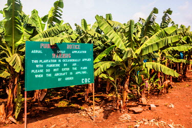 AF07ALA0044 Africa, Cameroon, Tiko. Sign at banana plantation warning of fungicide spraying.
