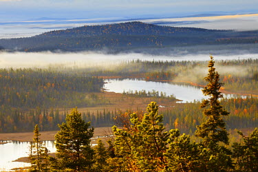 FIN1032AW Europe, Finland, Lapland, Salla, a view from the top of Ruuhitunturi Fell over Taiga forest