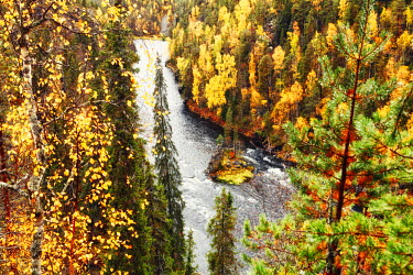 FIN1054AW Europe, Finland, Lapland, Kuusamo, Oulanka National Park, Kalliosaari island in the Kitkajoli river sits in a deep gorge surrounded by birch and spruce forest