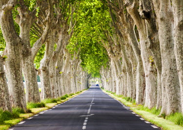 FRA8053AW A tree-lined road, Languedoc-Roussillon, France