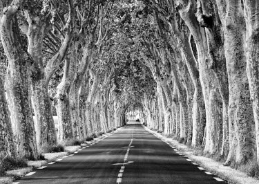FRA8054AW A tree-lined road, Languedoc-Roussillon, France