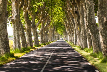 FRA8056AW A tree-lined road, Languedoc-Roussillon, France