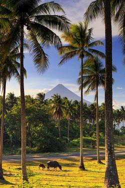 PH02207 Philippines, Southeastern Luzon, Bicol, Mayon Volcano