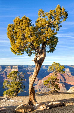 USA8949AW United States of America, Arizona, Grand Canyon, South Rim