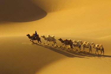 AS07BJA0028 China, Inner Mongolia, Badain Jaran Desert. Native man rides camel at head of caravan.