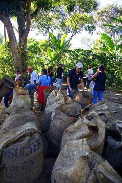 SA08CBA0231 El Salvador, Central America Carmen Organic Coffee Estate.