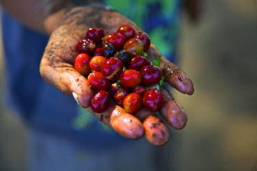 SA08CBA0233 El Salvador, Central America Carmen Organic Coffee Estate.