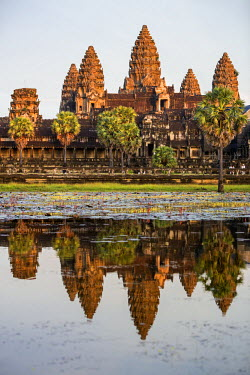 CMB1342 Cambodia, Angkor Wat, Siem Reap Province. The magnificent Khmer temple of Angkor Wat bathed in late afternoon sunshine with its towers reflected in a lake of red lotus flowers.