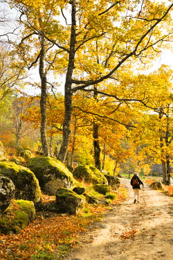 POR7498AW Medieval path with beech trees and chestnut trees in autumn time. Serra da Estrela Nature Park, Portugal (MR)