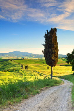 ITA2593AW Italy, Tuscany, Siena district, Orcia Valley, country road near Pienza.