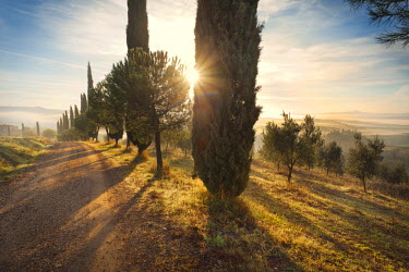 ITA2650AW Italy, Tuscany, Siena district, Orcia Valley, countryroad near San Quirico d'Orcia.