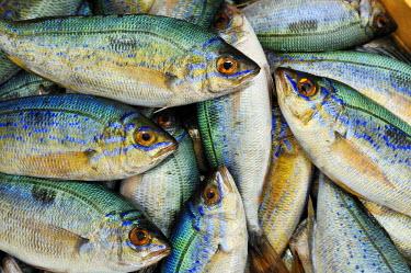 GRE0807AW Fish market, Ouranopoli, Chalkidiki, Greece