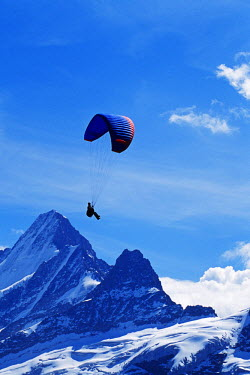 SWI7349AW Paragliding, Schreckhorn, Grindelwald, Bernese Oberland, Switzerland