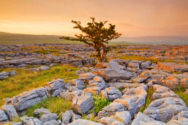 FVG005475 UK, United Kingdom, England, North Yorkshire, Ingleton. The trees grow on a plateau of limestone.