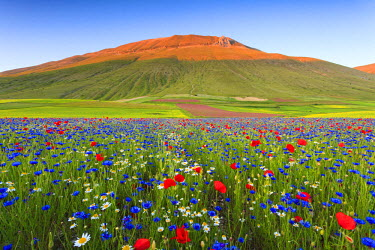 FVG001822 Italy, Umbria, Sunset in Castelluccio di Norcia during flowering