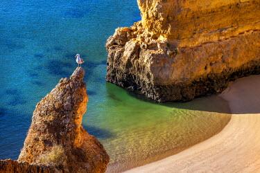 POR7845AW Beach, Praia Dona Ana, Lagos, Algarve, Portugal