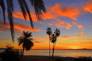 MEX1444AW Palm trees at sunset in La ventana, Baja California Sur, Mexico,