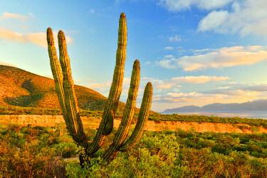 MEX1443AW Cactus and arroyo near El Sargento,Baja California Sur, Mexico