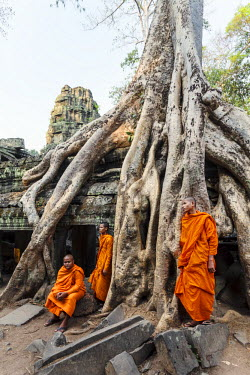 CMB1409AW Cambodia, Siem Reap, Angkor Wat complex. Monks inside Ta Prohm temple (MR)